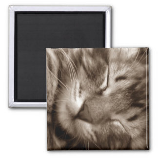 cat sleeping 2 inch square magnet