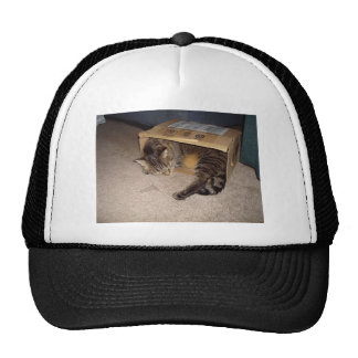 Cat sleeping in box mesh hat