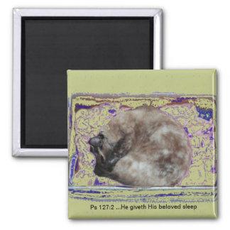 Cat Sleeping in Box Psalm Scripture Resting Animal Magnet
