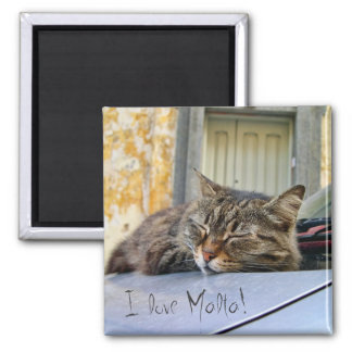 Cat sleeping on a car 2 inch square magnet