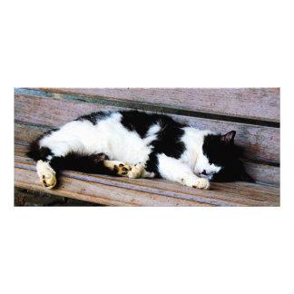 Cat Sleeping on Bench Rack Card