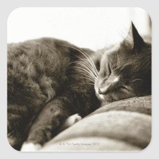 Cat sleeping on sofa (B&W sepia tone) Square Sticker