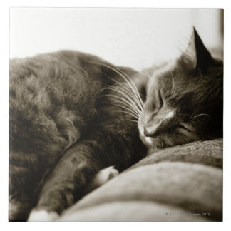 Cat sleeping on sofa (B&W sepia tone) Tile