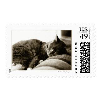 Cat sleeping on sofa stamp
