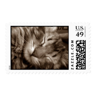 cat  sleeping postage