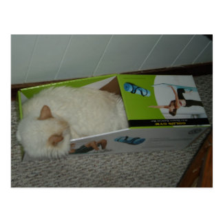 Cat Sleeps in Exercise-Mat Box Postcard