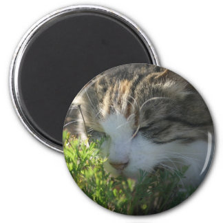 Cat Smelling a Plant 2 Inch Round Magnet