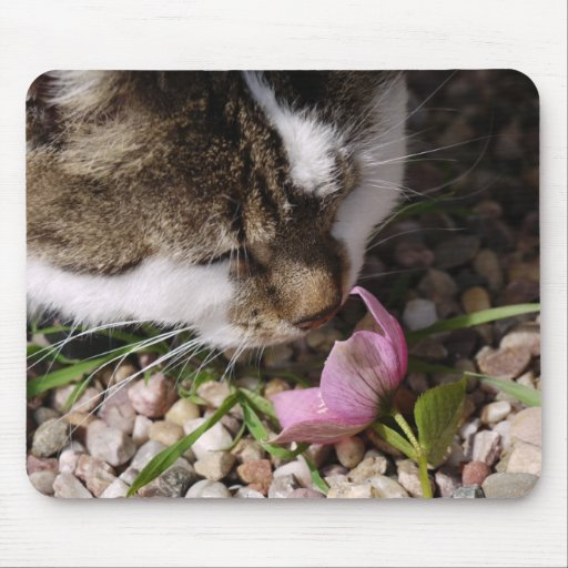 Cat sniffing flower mouse pads