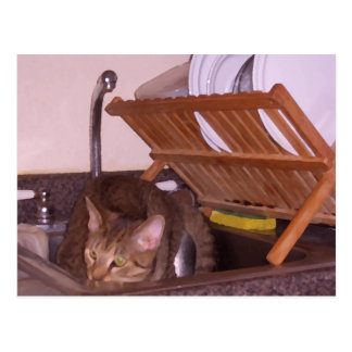 Cat Sous-Chef Hiding in the Sink CricketDiane Postcard