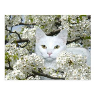 Cat spring fever postcard