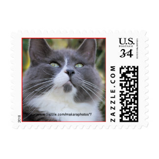 Cat stamp-choose size and denomination-customize postage