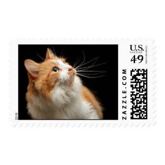 Cat Stamps