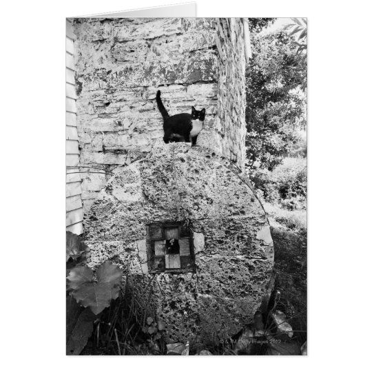 Cat standing on old stone wheel card