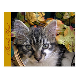 Cat Stare, Maine Coon Kitty Cat Kitten,Fall Leaves Postcard
