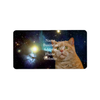 Cat staring at the universe address label
