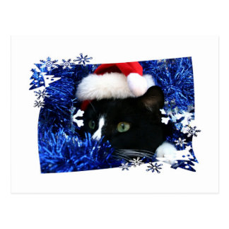 Cat staring out of blue Tinsel with santa hat Post Cards