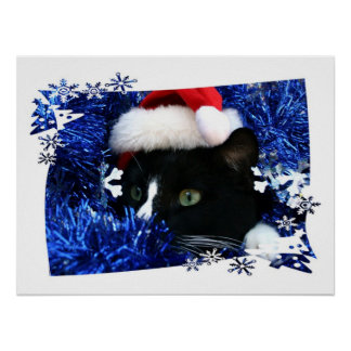 Cat staring out of blue Tinsel with santa hat Poster