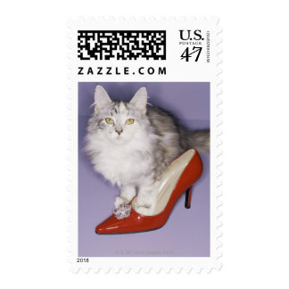 Cat stepping into high heel postage