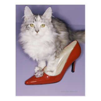 Cat stepping into high heel postcard