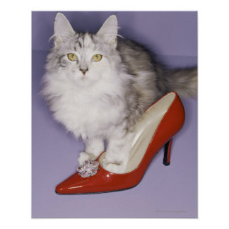 Cat stepping into high heel poster