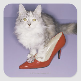 Cat stepping into high heel square sticker