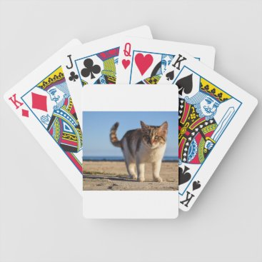 Beach Themed Cat Stray Animal Cute Young Face Eyes Beach Bicycle Playing Cards