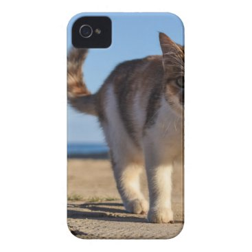 Beach Themed Cat Stray Animal Cute Young Face Eyes Beach Case-Mate iPhone 4 Case