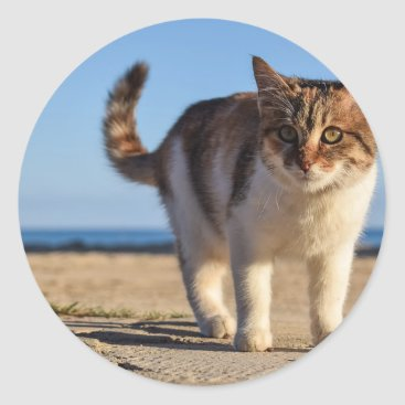 Beach Themed Cat Stray Animal Cute Young Face Eyes Beach Classic Round Sticker