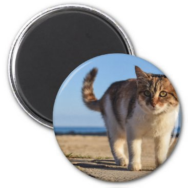 Beach Themed Cat Stray Animal Cute Young Face Eyes Beach Magnet
