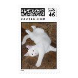 Cat Stretch - Stamp