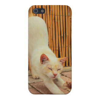 Cat Stretching iPhone 4/4S Case