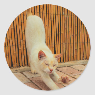 Cat Stretching Stickers
