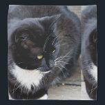 "Cat Subject Bandana<br><div class=""desc"">Cat Subject,  Beautiful Cat. Great Gift For Any  Animal Admirer.</div>"