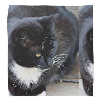 Cat Subject Bandana