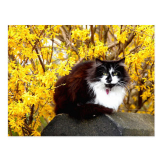 Cat surrounded by yellow forsythia blooms postcard