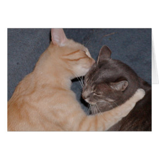 Cat Sweet Nothings Valentines Day Card