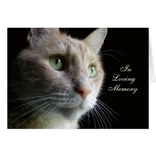 Image Result For Sympathy Cards Cats