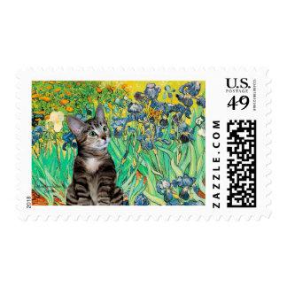 Cat (Tabby 2) - Irises Postage