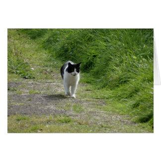 Cat taking a stroll card