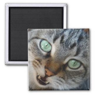 Cat talking magnet