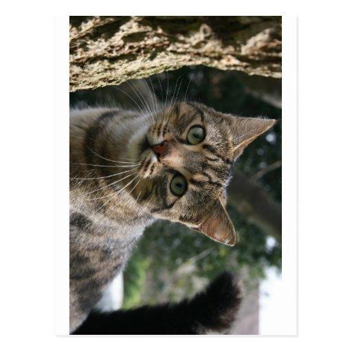 CAT POSTALES