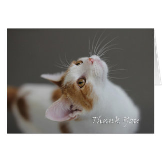 Cat Thank You Card by Focus for a Cause