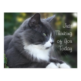 Cat Thinking of You card or any occasion