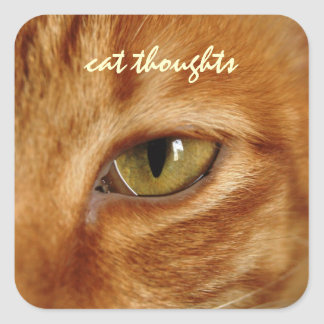 cat thoughts square sticker