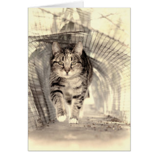 Cat Through the Tunnel Card