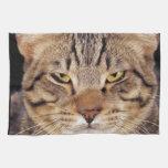 CAT TOALLA