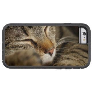 cat tough xtreme iPhone 6 case
