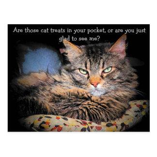 Cat Treats? or... Postcard