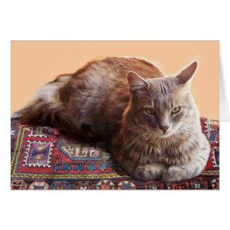 CAT TURCO EN LA ALFOMBRA VIEJA FELICITACION