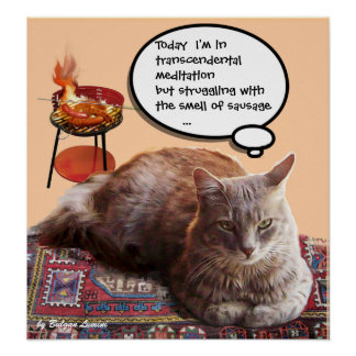 CAT TURCO EN LA MEDITACIÓN TRASCENDENTAL PÓSTER